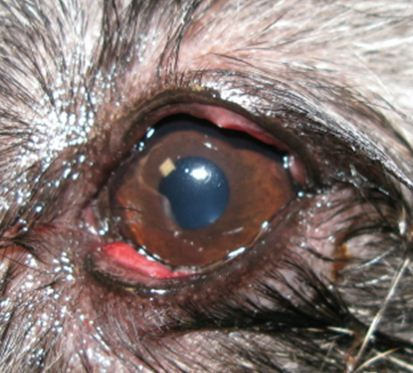 Close up of the right eye.