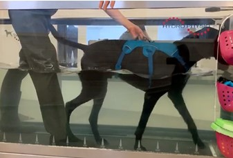 hydrotherapy on underwater treadmill