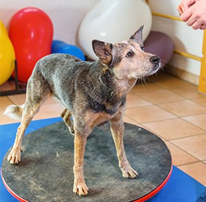 Veterinary Physiotherapy Referrals