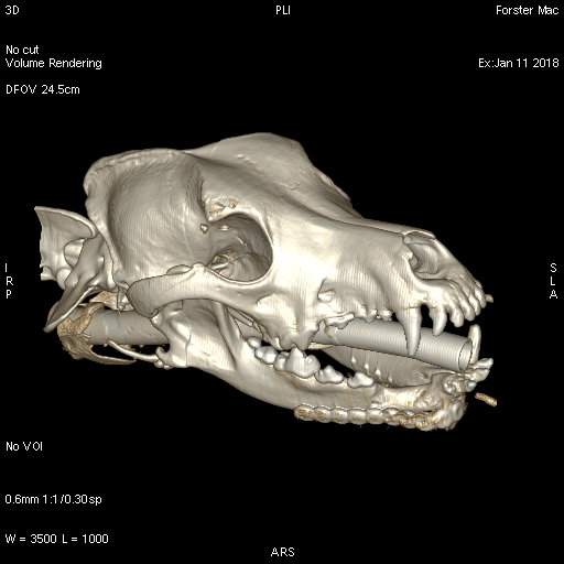 CT after mandibular reconstruction in dog