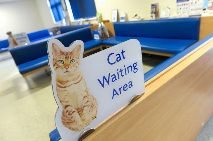 Cat Waiting Areas at Eastcott Referrals
