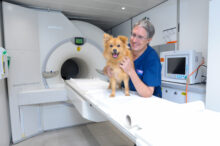 Referral Radiographer - Veterinary Nurse Awareness Month 2021