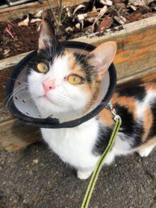 Eastcott saves deaf cat from going blind